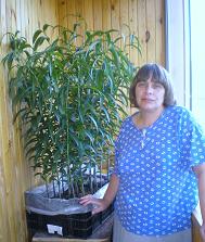 Лилии на балконе